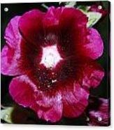 Assorted Flower 004 Acrylic Print