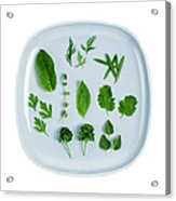 Assorted Fresh Herb Leaves On Blue Plate Acrylic Print