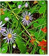 Asters And Scarlet Paintbrush On Swan Lake Trail In Grand Teton National Park-wyoming  Acrylic Print