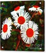 Asters Bright And Bold Acrylic Print
