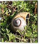 At A Snail's Pace Acrylic Print