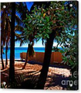 At Dog's Beach In Key West Acrylic Print by Susanne Van Hulst