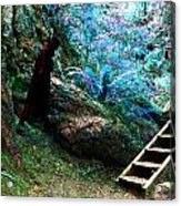At Home In Her Forest Keep - Pacific Northwest Acrylic Print