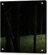 At Play In Darkened Woods Acrylic Print
