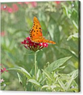 At Rest - Gulf Fritillary Butterfly Acrylic Print