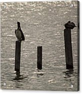 Seadrift Texas Birds At Rest Acrylic Print