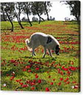 At Ruchama Forest Israel 1 Acrylic Print