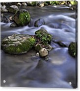 At The Banias River 1 Acrylic Print