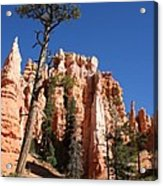 At The Bottom Of The Bryce Np Acrylic Print