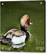 At The Duck Pond Acrylic Print