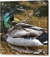 At The Duck Pond V5 Acrylic Print