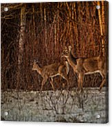 At The Edge Of The Woods Acrylic Print