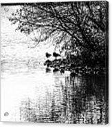 At The Lake-39 Acrylic Print