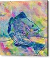 Atlantic Codfish Digital Color Acrylic Print
