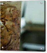 Atlantic Salmon Stocking Acrylic Print