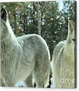 Attention Grabber Acrylic Print