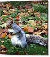 Attentive Squirrel Acrylic Print