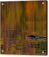 Atumn Reflections Acrylic Print
