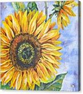 Audrey's Sunflower Acrylic Print