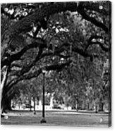 Audubon Park Oaks Acrylic Print