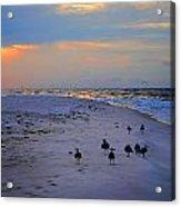 August Beach Morning With The Sea Gulls Acrylic Print
