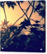 August Memories Acrylic Print