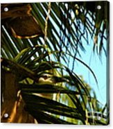 Auku'u The Black Crowned Night Heron Acrylic Print