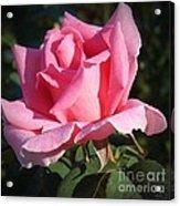 Aunt Honey Rose Acrylic Print