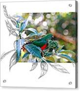 Australian King Parrot Acrylic Print