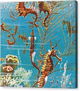 Australian Seahorses Acrylic Print