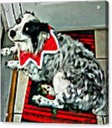 Australian Shepherd Christmas Dog Acrylic Print