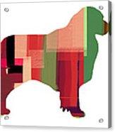 Australian Sheppard Acrylic Print by Naxart Studio