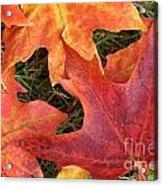 Autum Leaves Acrylic Print