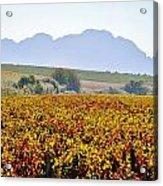 Autum Wine Field Acrylic Print