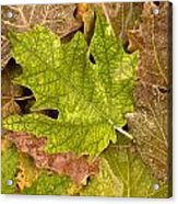 autumm is coming 3 - A carpet of autumn color leaves Acrylic Print