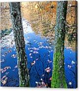 Autumn - 7 Acrylic Print by Okan YILMAZ