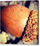 Autumn Acorn Acrylic Print by Candice Trimble