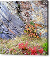 Autumn And Rocks Acrylic Print