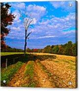 Autumn And The Tree Acrylic Print