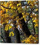 Autumn Acrylic Print by Anonymous