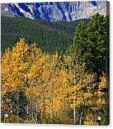 Autumn Aspens And Longs Peak Acrylic Print