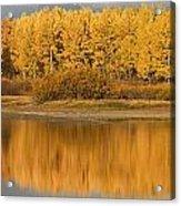 Autumn Aspens Reflected In Snake River Acrylic Print by David Ponton