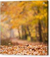 Autumn At Great Falls Acrylic Print