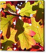 Autumn At Its Best Acrylic Print