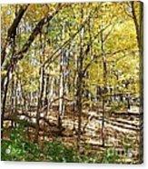 Autumn At Waterfall Glen Acrylic Print