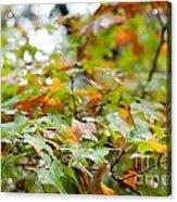 Autumn Acrylic Print by Barbara Shallue