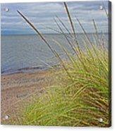 Autumn Beach Grasses Acrylic Print
