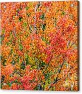 Autumn Outbeats Summer Acrylic Print