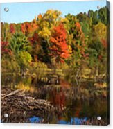 Autumn Beaver Pond Reflections Acrylic Print