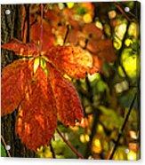 Autumn Begins 2 Acrylic Print